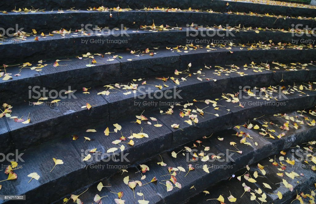 Stairs of the park stock photo