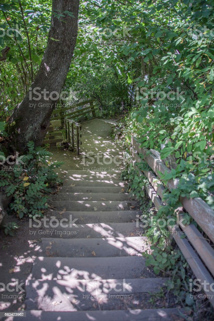 Stairs Through Nature royalty-free stock photo