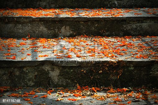 stairs with fall orange flowers and light and shadows