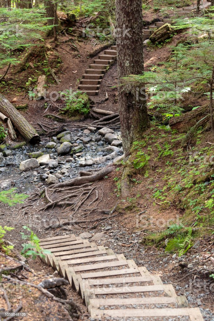 Stairscase in the forest near Haines Alaska