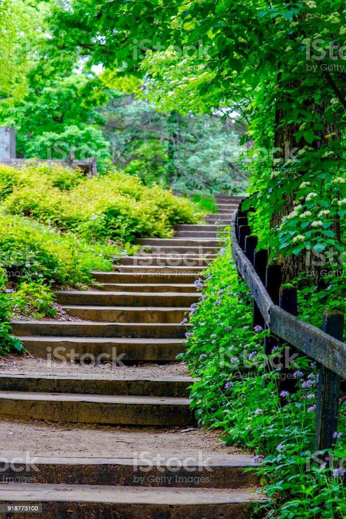 Stairway at a wildflower garden stock photo