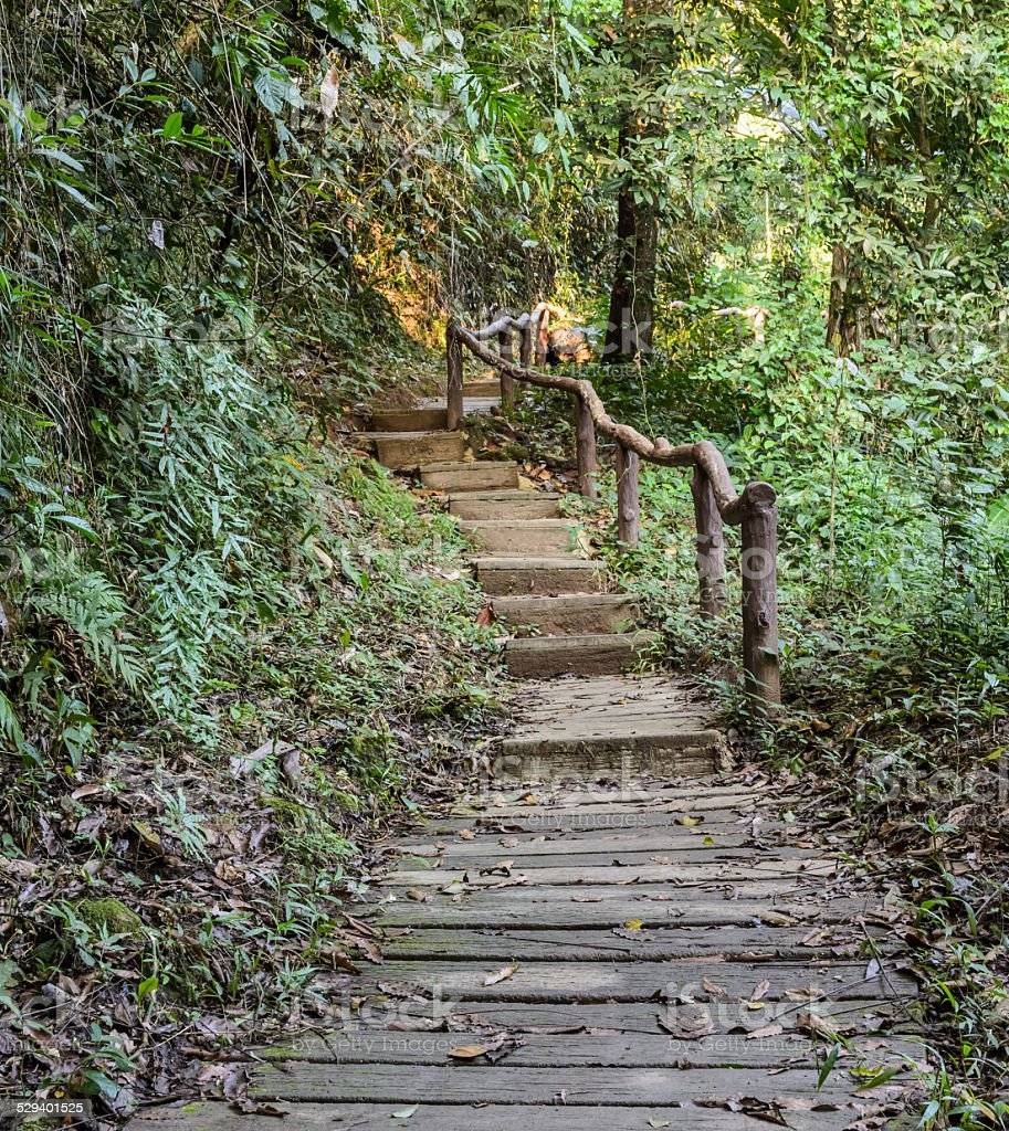 Stairway in the Deciduous forest stock photo