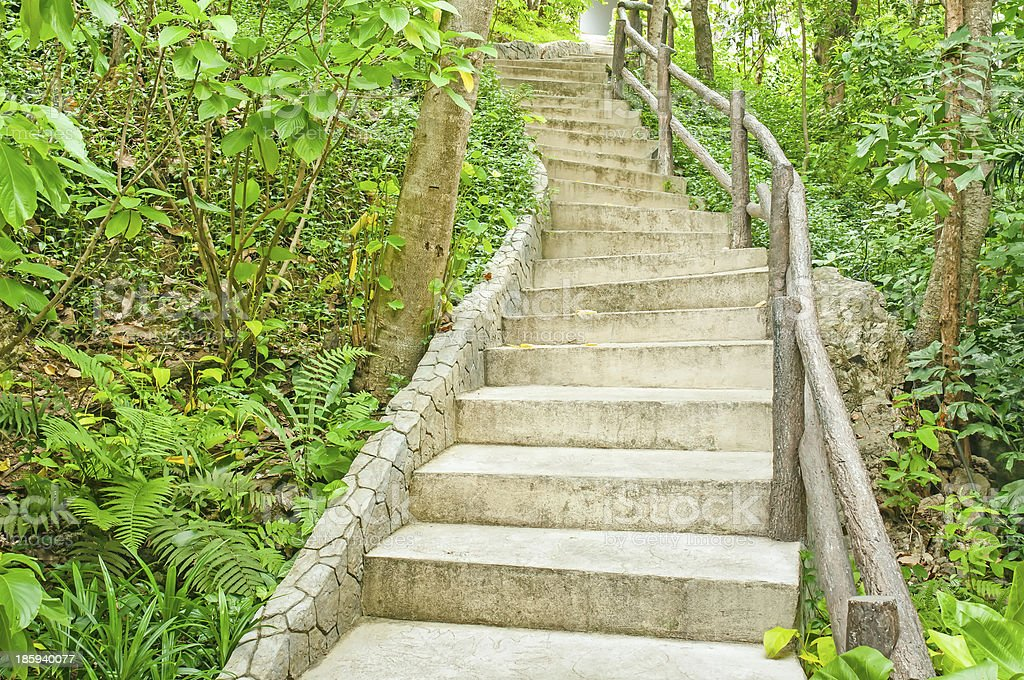 Stairway in the jungle royalty-free stock photo