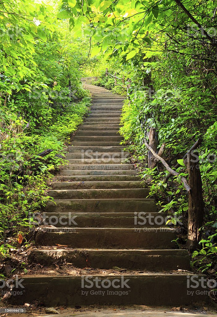 Stairway to forest stock photo