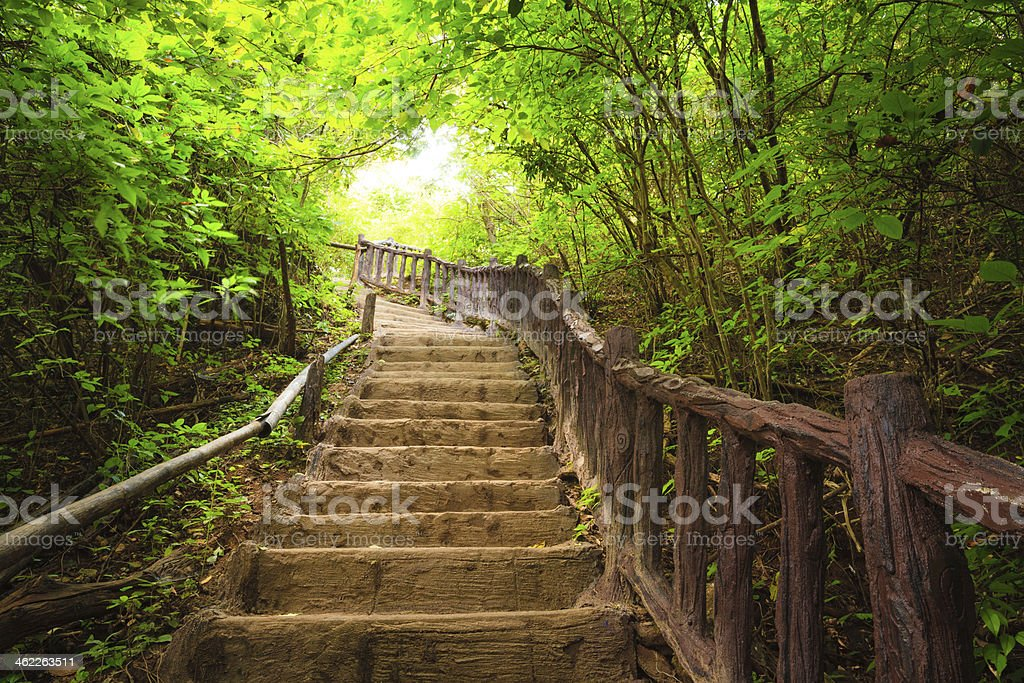 Stairway to forest – Foto