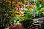 Laburnum Steps Botanical Garden
