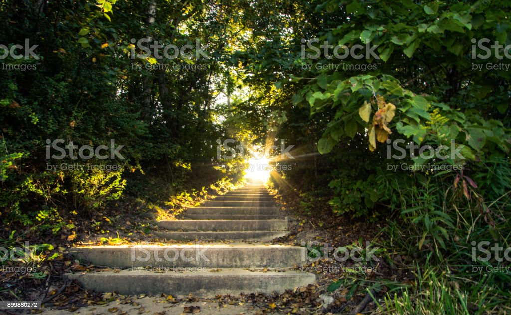 Stairway To Heaven. Sunlight Streams Through A Dense Forest Illuminating Stair Moving UP stock photo
