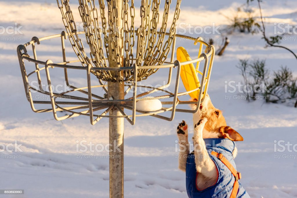Stalemate tough situation at disc golf playground stock photo