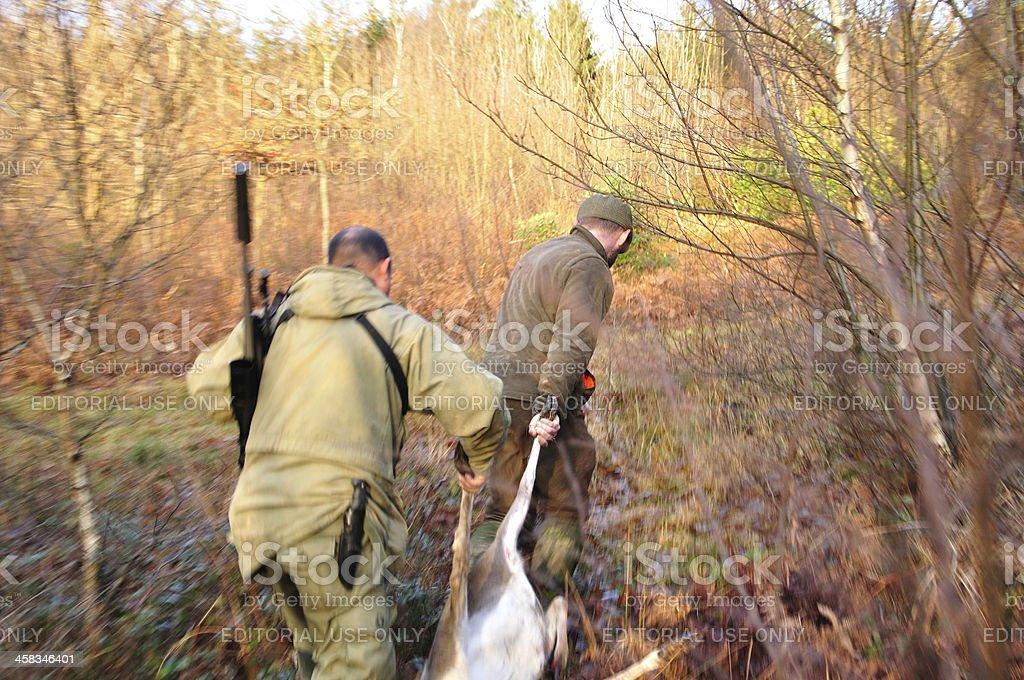 Stalkers dragging deer stock photo