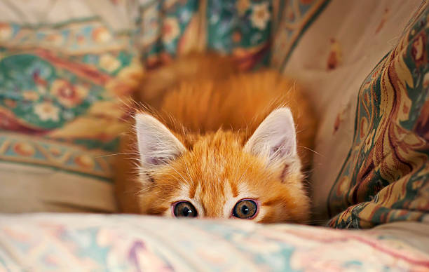 Stalking little kitten stock photo