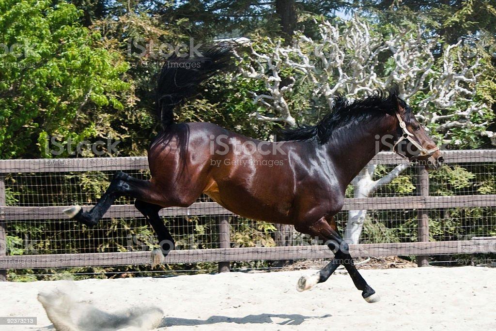 Stallion bucking royalty-free stock photo