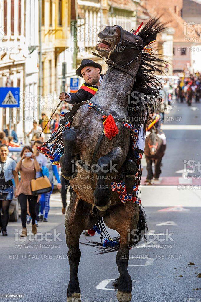 Stallion rearing with rider in Brasov, Romania stock photo