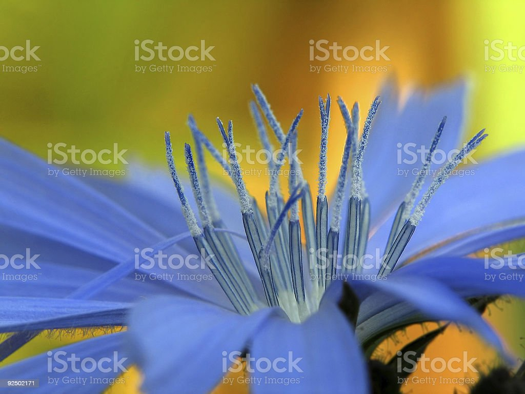 stamens royalty-free stock photo