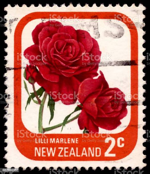 NEW ZEALAND - CIRCA 1975: A stamp printed in New Zealand shows Lilli Marlene , series devoted to roses, circa 1975