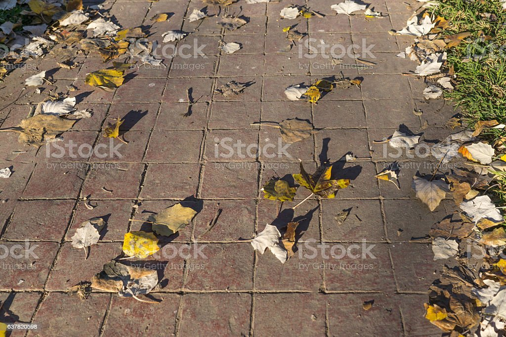 stamped concrete pavement outdoor flooring natural exterior with leaves and stock photo