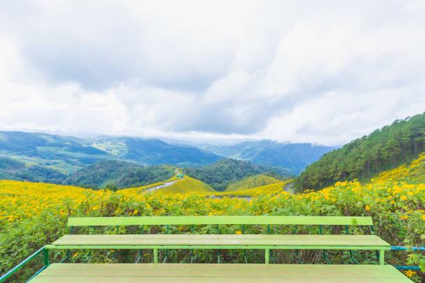 Stan des Aussichtspunkts gelbe Blüten – Foto
