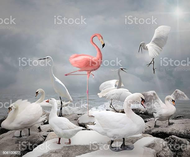 Stand out from a crowd flamingo and white birds picture id506100822?b=1&k=6&m=506100822&s=612x612&h=pxcfodv4kpbid5uhycnpjoonswpfuzwkj6yradija68=