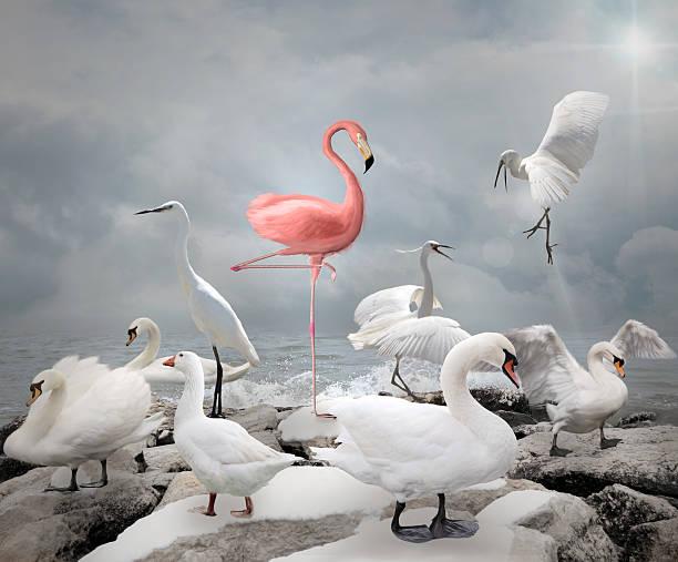 hebe dich von der masse ab – flamingo und weiße vögel - individualität stock-fotos und bilder