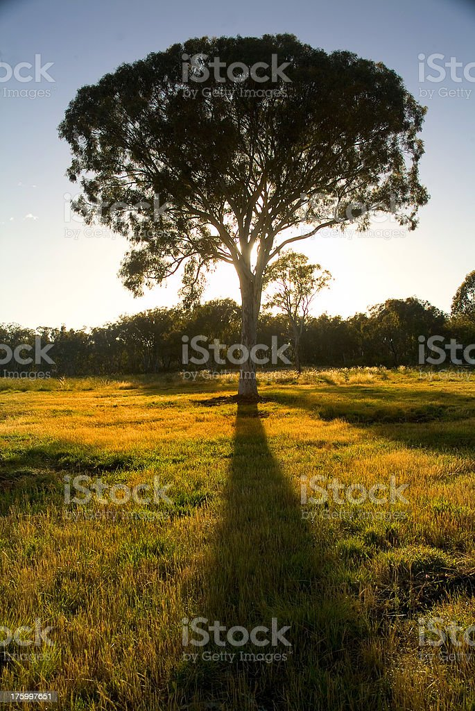 Stand Tall royalty-free stock photo