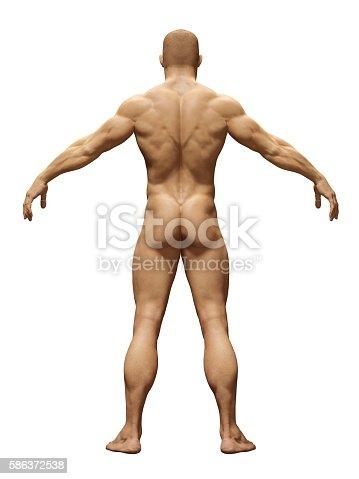135895161istockphoto Standard health men 586372538