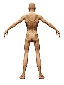 Standard thin men