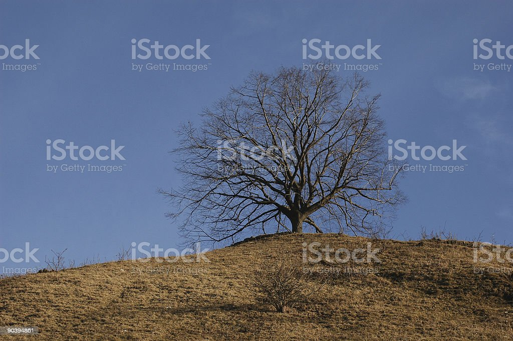 Standing alone tree stock photo