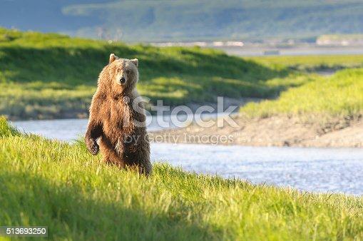 Standing Bear in Twilight River Landscape