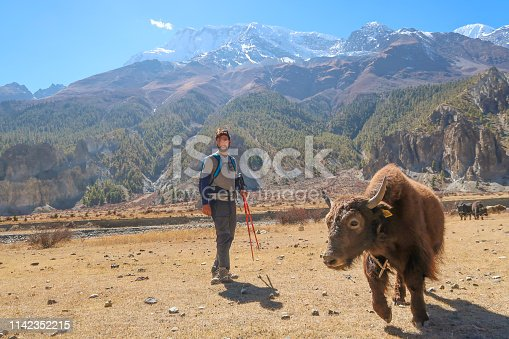 Standing by the Mountain Yak, Nepal