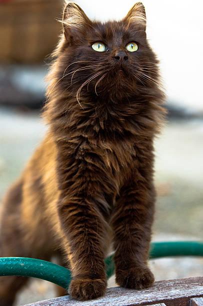 Standing Cat stock photo