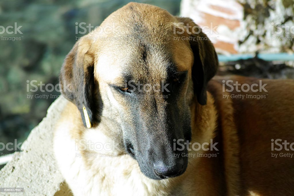 Standing Dog From Above Close-Up stock photo