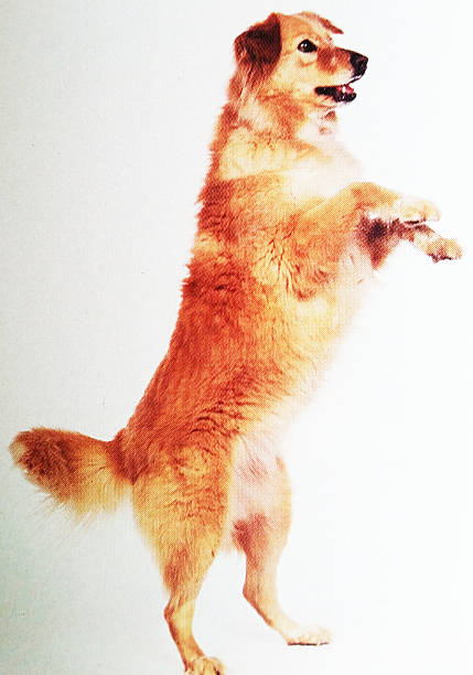 Standing Hund – Foto