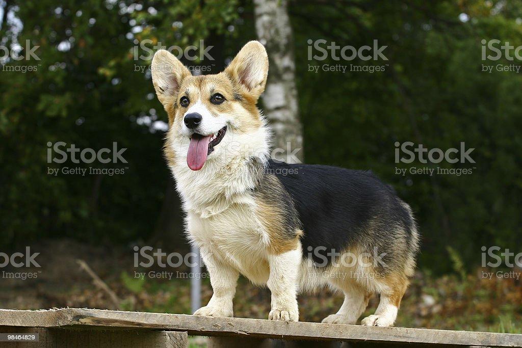 Standing dog stock photo
