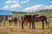 Standing horses on ranch mid-day heat
