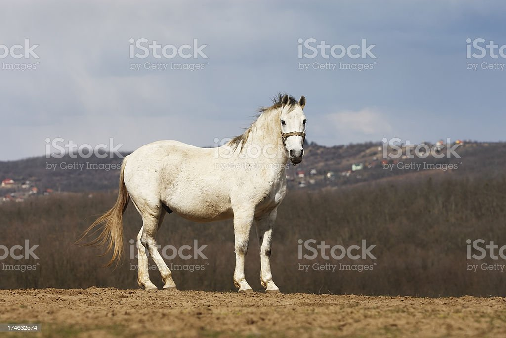 Standing on the hill royalty-free stock photo