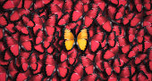 Standing out from the crowd concept: Large group of red butterflies as a background with one orange butterfly in the foreground.