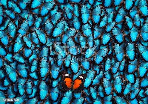 Blue butterfly background with single orange butterfly standing out from the croud.