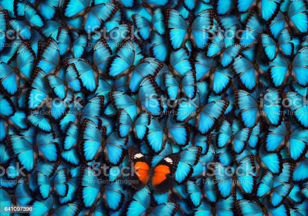 Standing out from the crowd picture id641097396?b=1&k=6&m=641097396&s=612x612&h=ktnycddjqijx2nfcgrwfx6bgp9t1u6zp6smbqcjmc u=