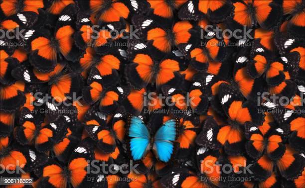 Standing out from the crowd picture id906116322?b=1&k=6&m=906116322&s=612x612&h=xgacz daze5nbly7doepfkyergmvnig hitrod tf1e=