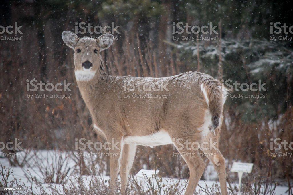 standing stock photo