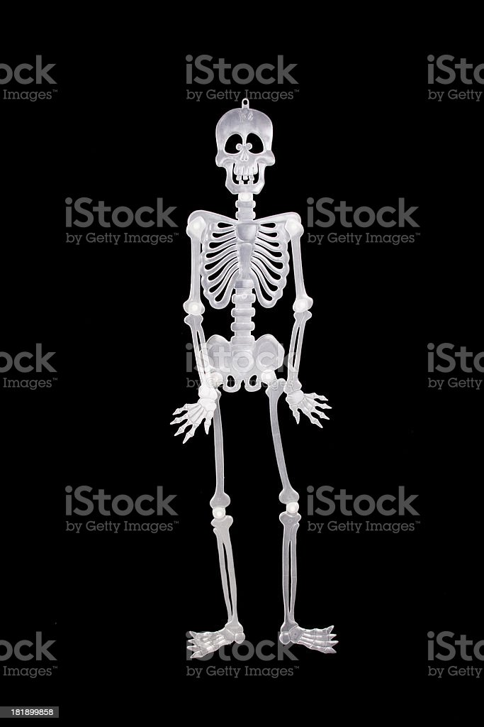 Standing Skeleton royalty-free stock photo