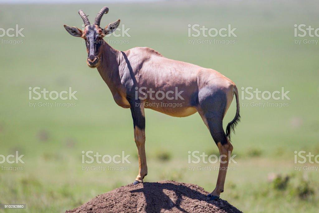 Standing Tall stock photo