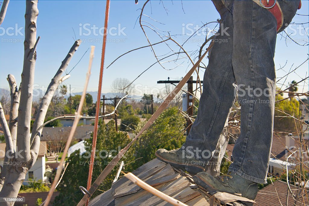 Standing Tree Surgeon royalty-free stock photo