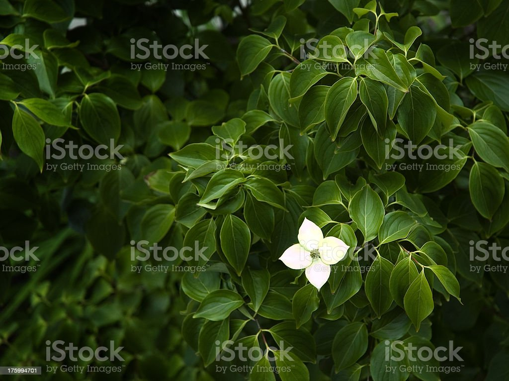 Standout Flower royalty-free stock photo