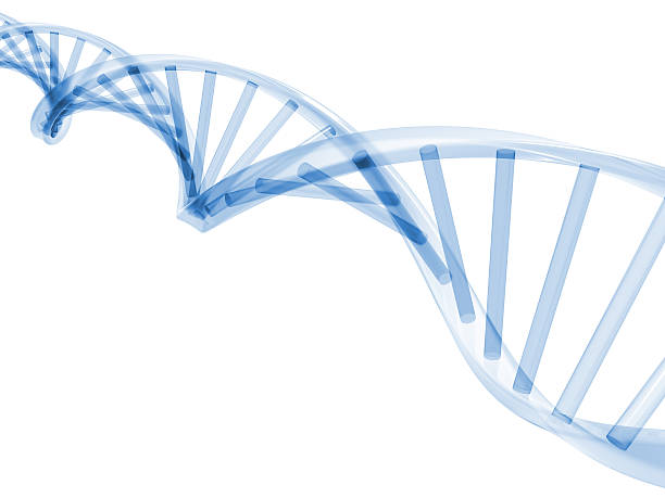 3D DNA Stands stock photo