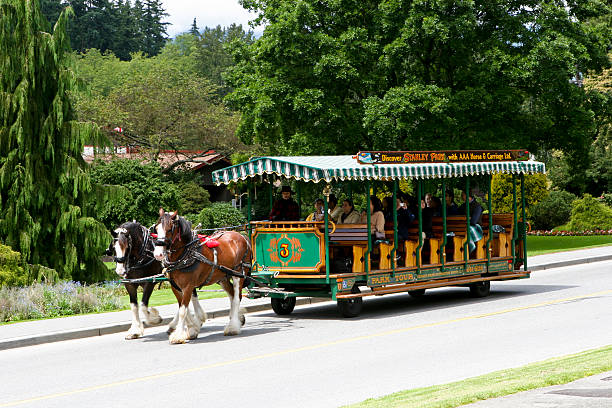 Staney Park Horse Drawn Carriage stock photo