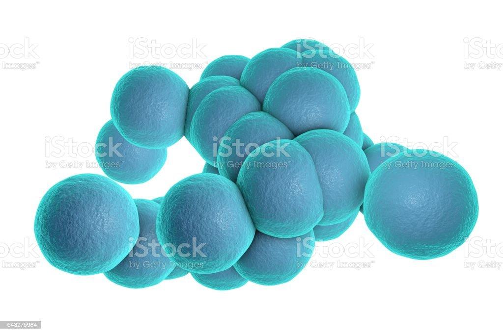 Staphylococcus aureus bacteria stock photo