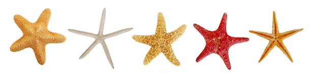 Star fish collection Star fish collection isolated starfish stock pictures, royalty-free photos & images
