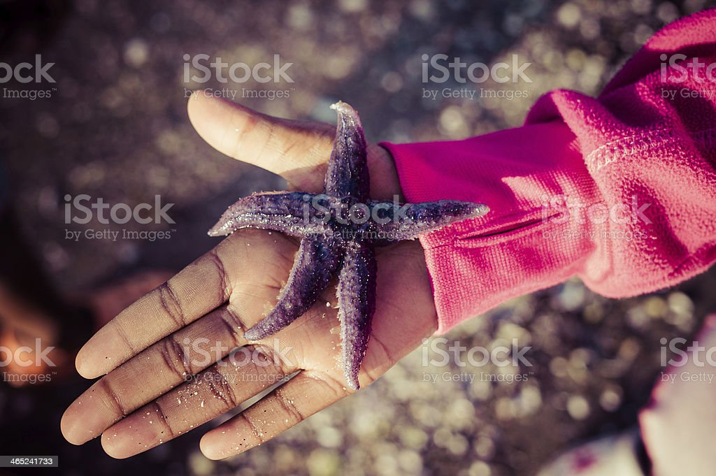 A lovely purple star fish on a little girls palm