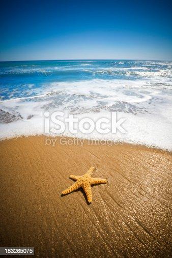 Star Fish - In Malibu California