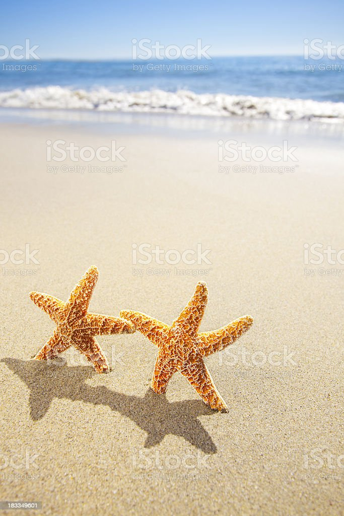Star Fish royalty-free stock photo